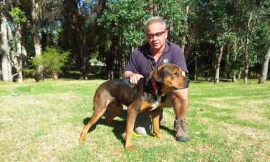 Dog Behavior Training Perth